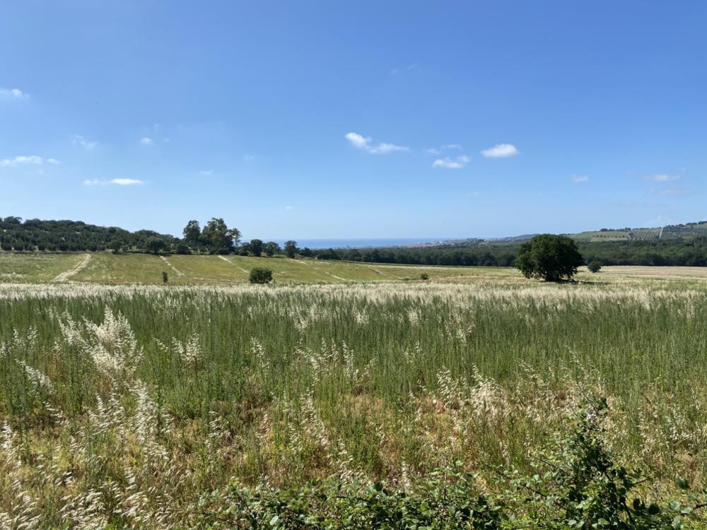 Terreno Agricolo in vendita a Campiglia Marittima