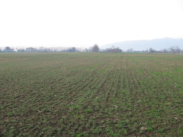 Vendo terreno via caselle Alvignano - 01