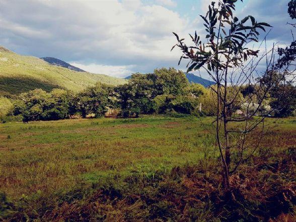 Vendo terreno agricolo Formicola lautoni