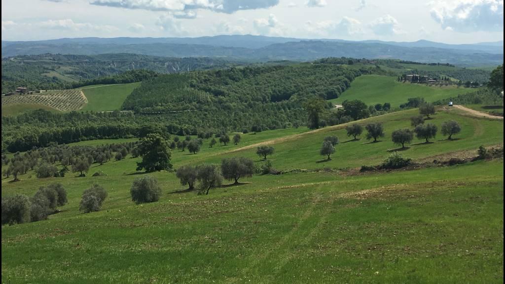 Vendo terreno agricolo a Allerona