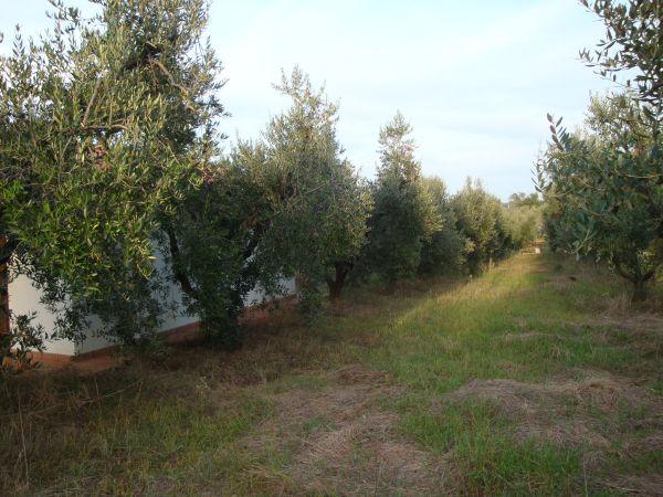 Terreno a Cecina - 01, DSC00413r.jpg