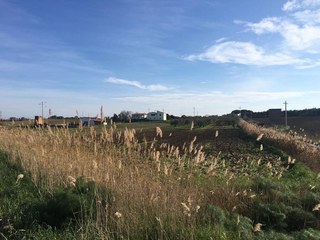Terreno Agricolo in vendita a Tarquinia
